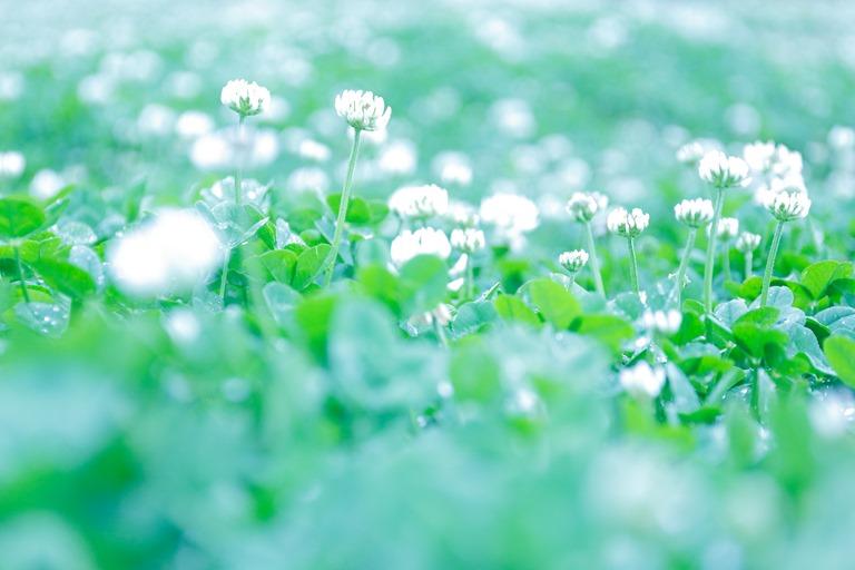 ふんわりした雰囲気の花